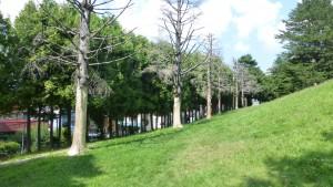 ぼうず山公園