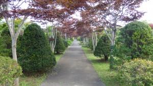 ノムラモミジ並木