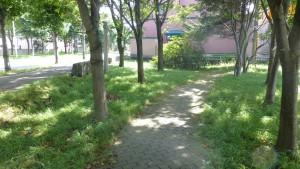 あいの里緑道(3号)