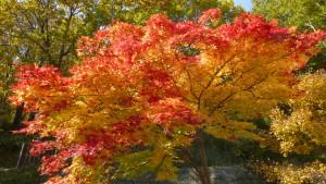 入口付近の紅葉