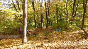 森の散策路