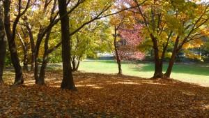 遊具広場の紅葉と落ち葉