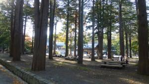 木立に囲まれた本殿