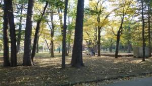 公園内の木立