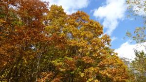 湿地帯周辺の紅葉