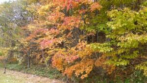 散策路付近の紅葉