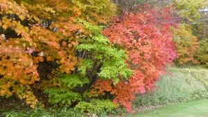 芝生広場周辺の紅葉