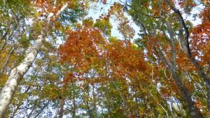 ログハウス周辺の紅葉