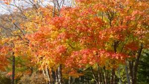 開拓の村前の紅葉