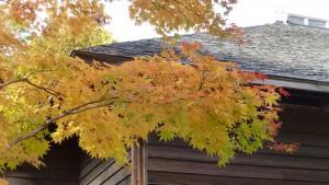 旧龍雲寺境内の紅葉