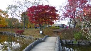 「海」周辺の紅葉