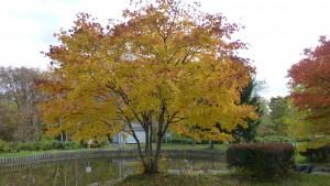 「池」周辺の紅葉