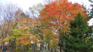 神社周辺の紅葉