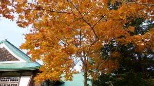 武道場周辺の紅葉