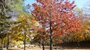 修景広場の紅葉