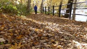 散策路の落ち葉