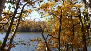 木々の間から貯水池を望む