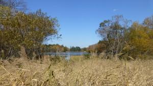 木道見晴台から貯水池を望む