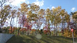 高台駐車場付近の紅葉