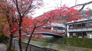 太鼓橋とモミジの紅葉3