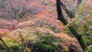 灌頂堂付近の紅葉