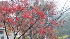 バス停付近の紅葉