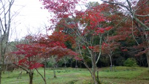 若桜友苑の紅葉