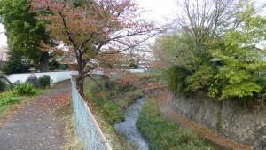 飛鳥川散策路