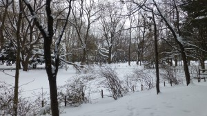 雪に覆われた下の池