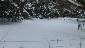 雪に覆われた上の池