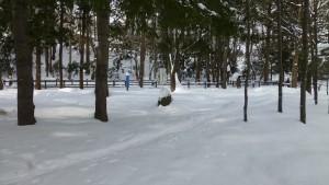 雪に覆われた遊水地