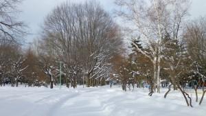 アカナラの並木