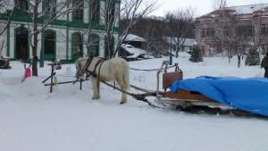 馬と馬そり