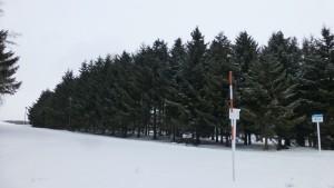 プンゲンストウヒ並木