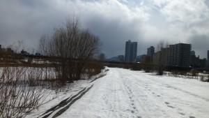 雪に覆われた緑地