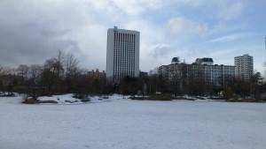 氷に覆われた菖蒲池
