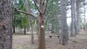 針葉樹見本林