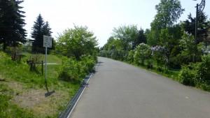 園路沿いのライラック
