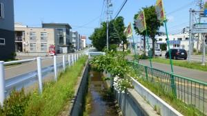前田川(樽川添大排水)