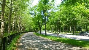 五輪通とプラタナス並木