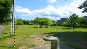 十五島公園(芝生広場)