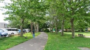 プラタナスの並木道