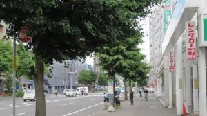 イチョウ並木(菊水旭山公園通)