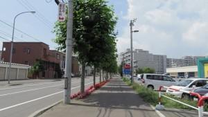 福住中央通のプラタナス並木