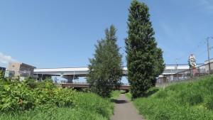 琴似新橋と札樽道高架橋