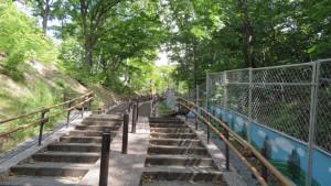 歴史の森への階段
