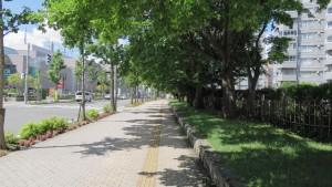 歩道を覆う街路樹