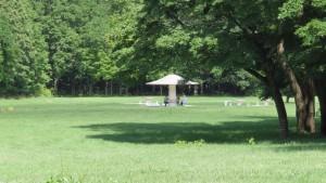 きのこ広場-真駒内公園