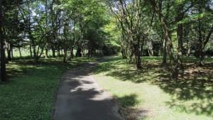 厚別北若葉公園