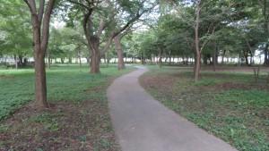 大学村の森(散策路)